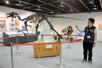 天草市の御所浦白亜紀資料館が所蔵する複製骨格などが並ぶ企画展の会場=熊本市中央区