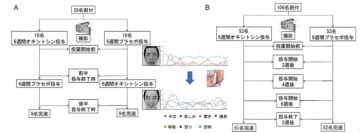 研究の概要。(画像:日本医療研究開発機構発表資料より)