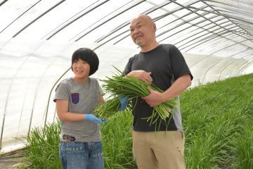 川島徳治さん(右)のビニールハウスでニラの収穫体験をするいばらき大使の緒方湊君=小美玉市山野