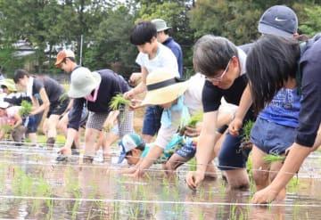 カエルの模様になるように稲を慎重に手植えする参加者たち(京丹波町曽根)