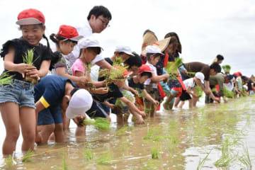 五穀豊穣(ほうじょう)を願い多くの人が協力して行われた御田植祭