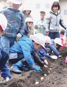 成長と収穫を願い種イモを植える子どもたち