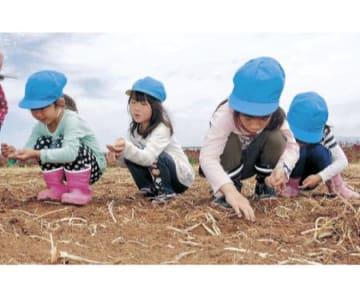 ひまわり村で種まき