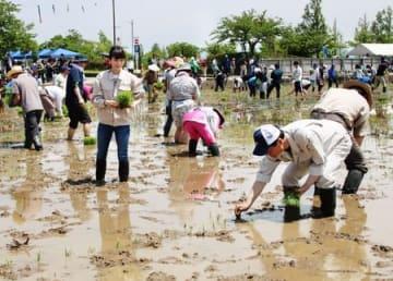 「下町ロケット」に出演した朝倉あきさんも参加した田植えイベント=18日、燕市