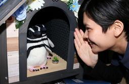 """質問に答える""""AIペンギン""""=須磨海浜水族園"""