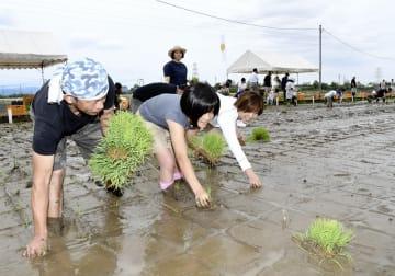 足を取られながら、いちほまれの苗を植える寄付者の家族=5月18日、福井県福井市の福井県農業試験場