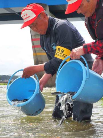 バケツに入れられたアユの稚魚を放流する組合員(福知山市猪崎・由良川左岸)