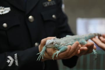 南京税関、野生動物の密輸·販売摘発を発表