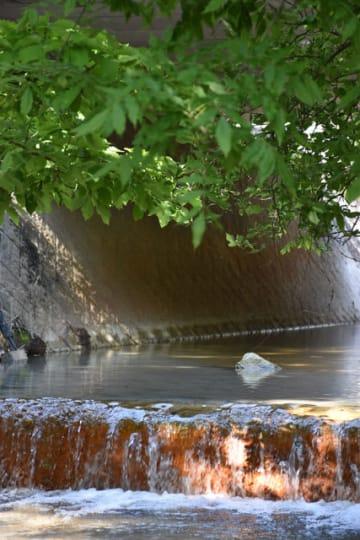 硫黄山から約1キロの地点にあるえびの橋の下を流れる赤子川。県の水質検査で、同地点で初めてヒ素濃度が環境基準値を下回った=23日午後、えびの市