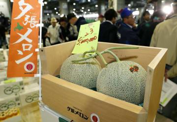 初競りで2玉500万円の過去最高額で落札された「夕張メロン」=24日午前、札幌市中央卸売市場