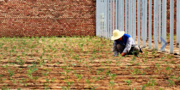 ゴビ砂漠を有機農場に 新技術で砂地での栽培実現