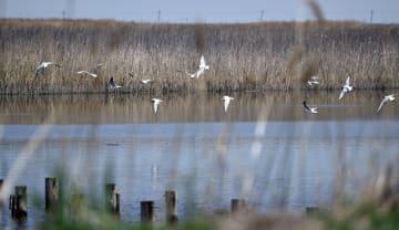 鳥たちの楽園 遼寧省遼河口国家級自然保護区