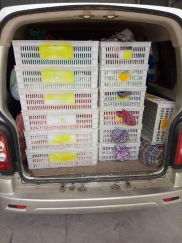 野生ヘビの密輸を摘発 約700匹を押収 雲南省徳宏