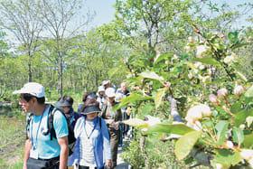 植物などの観察を楽しむ港立市民大学の受講生