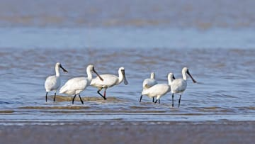 閩江口湿地、鳥たちの宿り場に 福建省