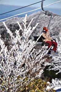 五ケ瀬ハイランドスキー場で陽光を浴びて輝く霧氷=18日午後、五ケ瀬町鞍岡