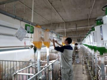 農畜産業への5G技術応用でスマート養豚発展へ 湖北省