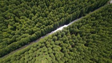 上海市崇明区の豊かな自然環境
