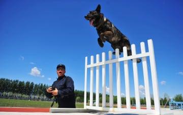「卒業試験」に臨む警察犬たち 黒竜江省ハルビン市