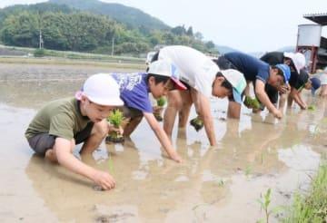 田植えを体験する児童たち