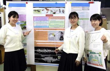 世界大会で使ったポスターを前に研究を振り返る(左から)玉田さん、日南さん、宮崎さん=長崎市、長崎西高