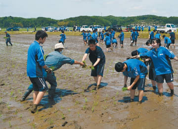 広々とした田んぼにささ結の苗を植える生徒たち