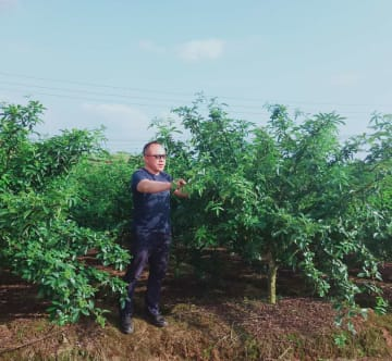中国商人、日本で花椒栽培に乗り出す 海外市場に活路