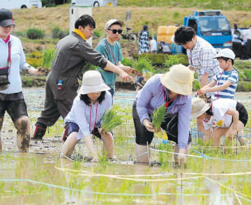 水田に張られた線を目安に苗を植える参加者