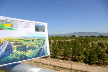 北京市、植林緑化を全面的に推進 苗木720万本を植樹