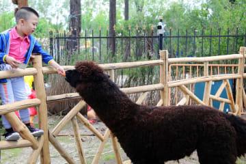 ハルビン極地館でふれあい動物園がプレオープン
