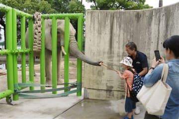 アフリカゾウに餌のリンゴを与える子ども=熊本市東区