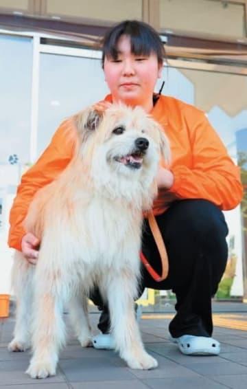 看板犬としてさまざまな役割を担うことになるモップ君=5月21日、大分市のおおいた動物愛護センター