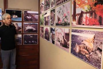 京都市内で気ままに暮らす猫を写した写真展と吉田さん(京都市北区・町家ギャラリーりこ)