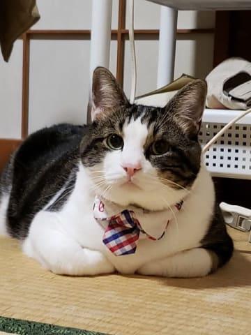 神戸土産のネクタイ締めて、おすまし顔のハッピー君