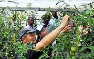峰岸さん(左)からトマト栽培を学ぶ参加者
