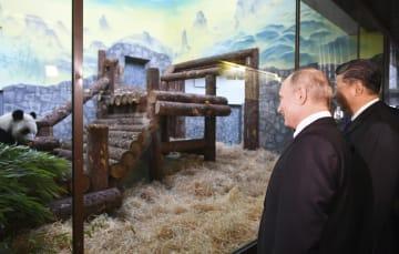 5日、モスクワの動物園でパンダを視察するロシアのプーチン大統領(左)と中国の習近平国家主席(タス=共同)