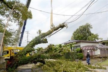強風のため折れた宮地神社のエノキの枝=7日午後1時半ごろ、熊本市南区城南町