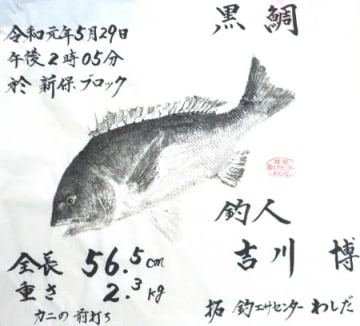 吉川さん(福井市)のチヌ魚拓
