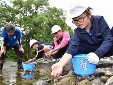 奥入瀬川にイワナの稚魚を放流する法奥小の児童