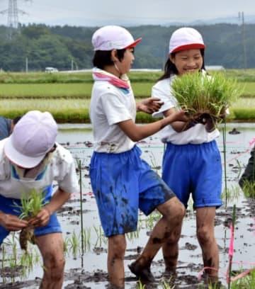 田んぼアートの田植えに挑戦する一方井小の児童たち