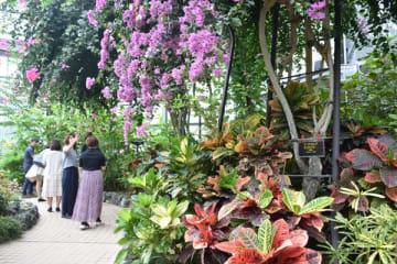 とちぎ花センターを見学するマスコミ関係者ら=7日午前、栃木市