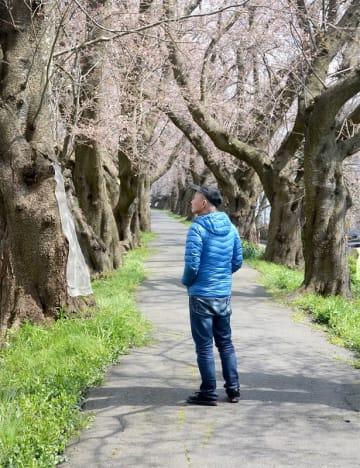 「来年の桜は見られない」と余命宣告されてから、6回目の春。英二さん(仮名)は「桜を見るたび、生きていることを実感する」と話す=4月、福井県福井市内