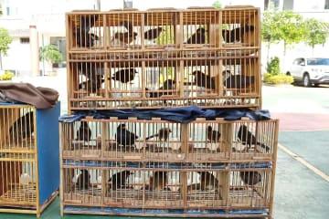 雲南省で密猟摘発 野鳥60羽余りを保護