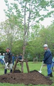 クシロヤエザクラの記念植樹を行う増田事業所長(右)と明村会長