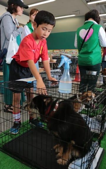 犬と猫の新しい飼い主を探した譲渡会=長崎県佐世保市広田3丁目