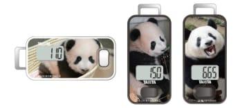 上野動物園の人気者「シャンシャン」とともに楽しくウォーキング