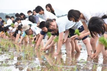 えびの市で田植えを体験する兵庫県・稲美北中の修学旅行生