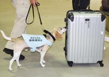 荷物をかぎ分ける検疫探知犬=14日午後、松山空港