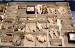 寄贈された標本の数々=大阪市立自然史博物館