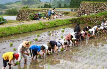 横一列に並んで、坂元棚田で田植えをする参加者